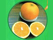 原生态蜜橙