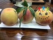 大家-桃子代理销售