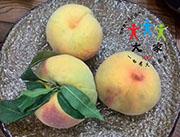 大家-桃子种植