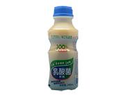 顶元-统圆乳酸菌饮品瓶装