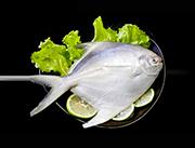 宇飞远洋印度洋鲳鱼