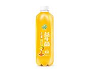 果哇伊益生菌芒果发酵果汁饮料1.25L