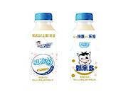 完达山(上海)乳业乳酸菌净含量340ml