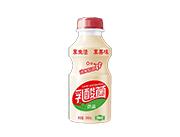 乳酸菌饮品340ml