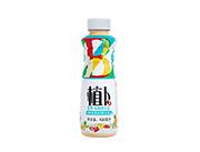 植卜乳酸菌饮品420ml