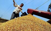 12月24日国内豆粕主流价格再度下跌20-50元