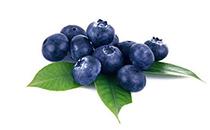 百草味蓝莓果干价格