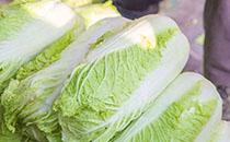 冬令蔬菜大白菜的最新�r格