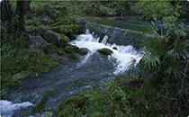 洞庭山天然泉水�r格