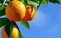 鲜榨橙汁功效作用有哪些