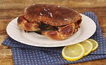 面包蟹的禁忌