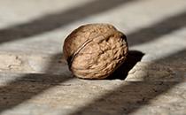坚果打造健康零食新风潮
