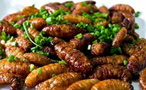 据澳洲科学家研究,昆虫食物可以在一定程度上保护环境!