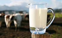 国产奶业用科技发力走上优质乳之路