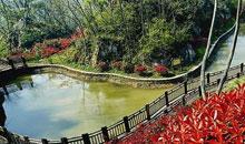 红叶谷-第八届山东国际糖酒会旅游推荐