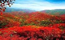 2018中国高端食品展旅游推荐――香山!